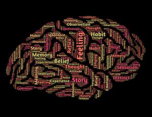 płeć mózgu