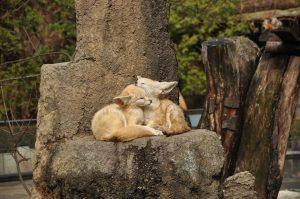 Duchowe życie zwierząt